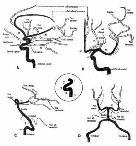 Fuente: Basic Human Anatomay- O´Rahilly-Müller-Carpenter&Swenson